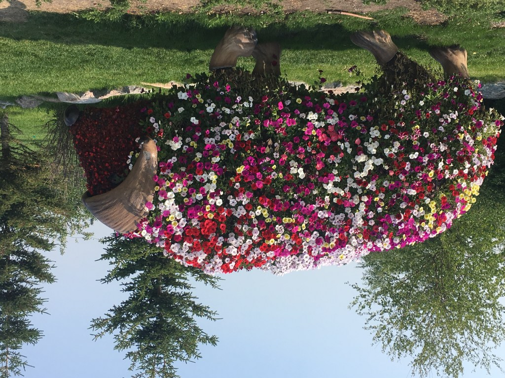 Elon Muskox covered in flowers at Somba K'e Park Scenic Locations